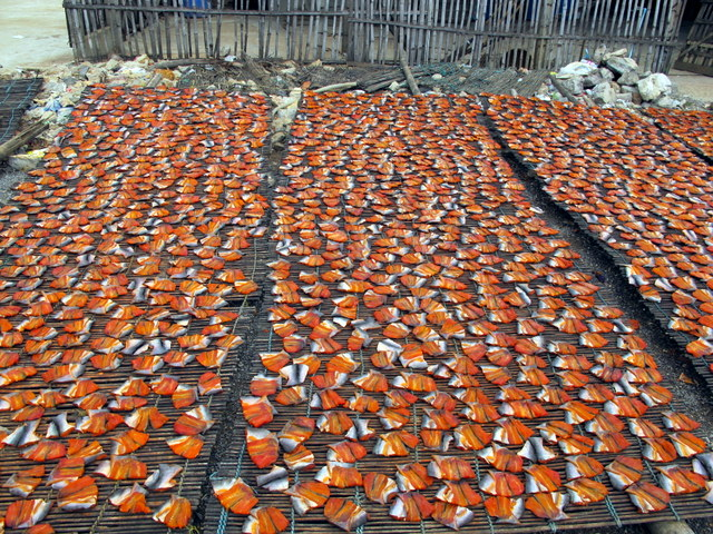 Fish drying in the hot Cambodian sun