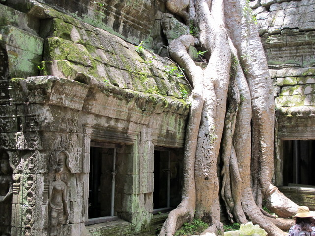 The Angkor  temple of Ta Prom under attack by nature.