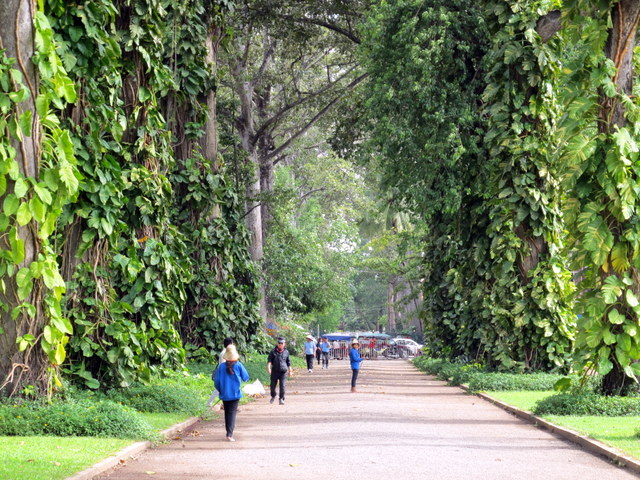 Tree lined avenue in the Royal Garden, Siem Reap