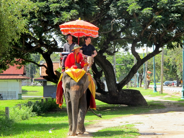 Elephant ride to the temples of Ayutthaya