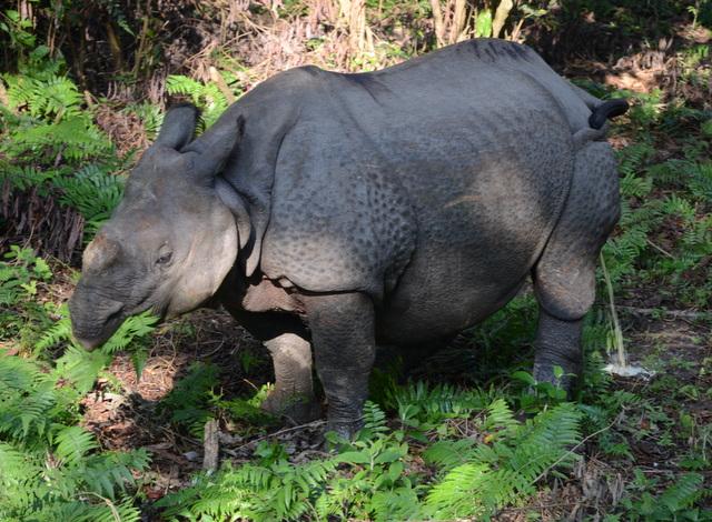 Chitwan National Park: The jewel of Nepal