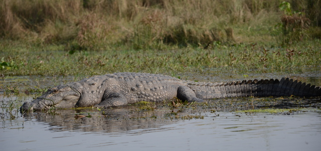 Another day in Paradise…Chitwan National Park and beyond.