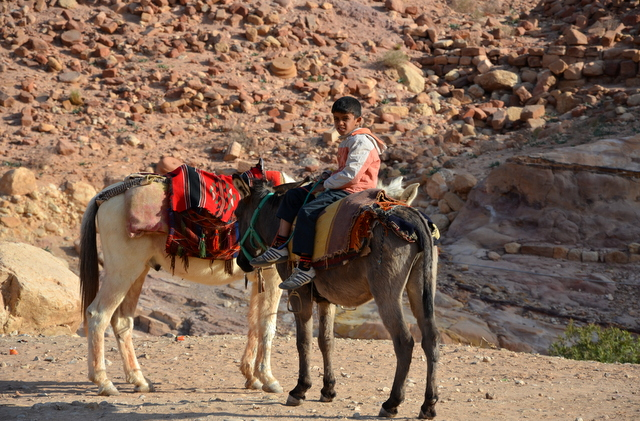Donkey Taxi in the valley of Petra Jordan