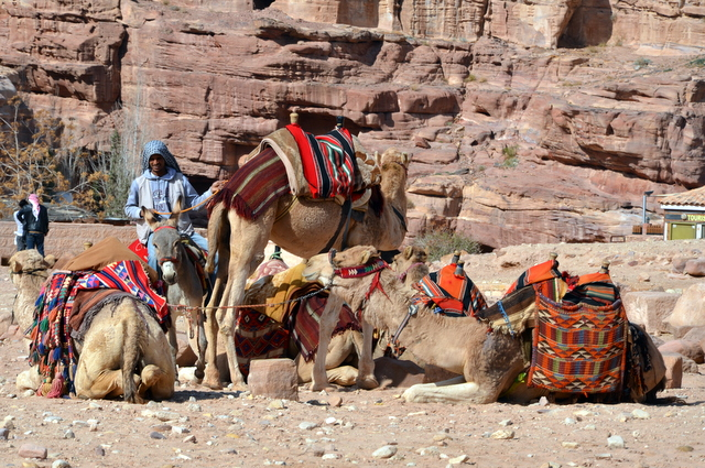 Petra Taxi's waiting for a fare